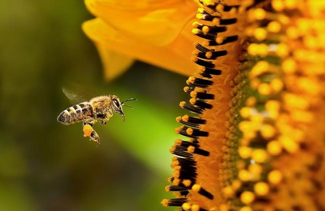 Name:  pollination.jpg Views: 936 Size:  32.0 KB