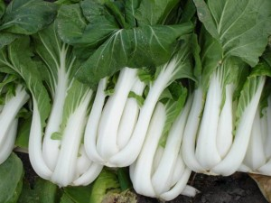 Name:  pak-choi-ivory-300x225[1].jpg