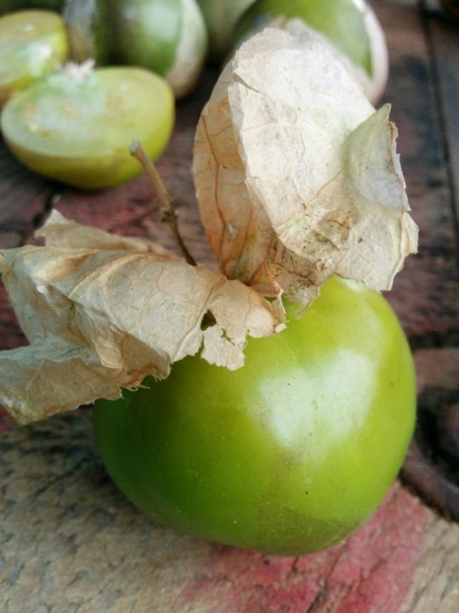 Name:  Tomatillo I.jpg Views: 743 Size:  56.3 KB