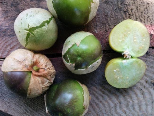 Name:  Tomatillo II.jpg Views: 686 Size:  48.9 KB