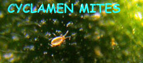 Name:  mites-hd.jpg