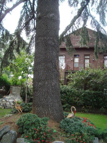 Name:  Ağaç gövde ve kökleri 9.jpg Views: 6987 Size:  72.4 KB