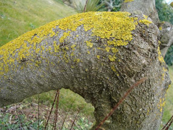 Name:  Ağaç gövde ve kökleri 28.jpg Views: 2679 Size:  71.2 KB