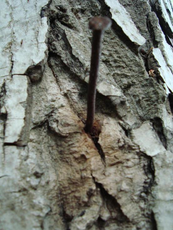 Name:  Ağaç gövde ve kökleri 89.jpg Views: 1224 Size:  75.5 KB