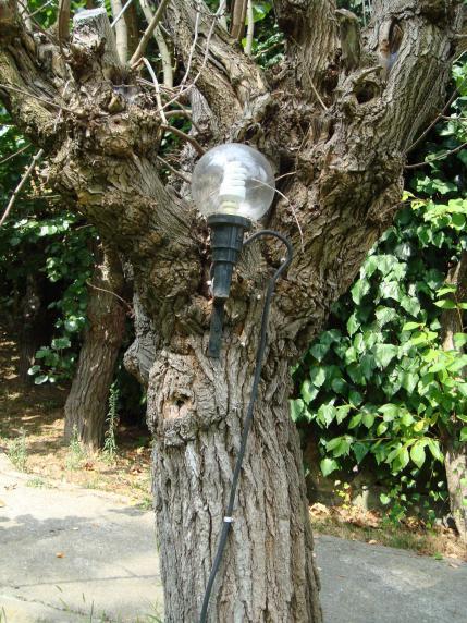 Name:  Ağaç gövde ve kökleri 92.jpg Views: 1538 Size:  76.0 KB