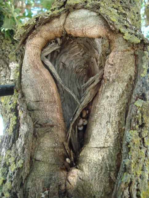 Ağaçların gövde yapılarındaki ayrıntılar paylaş sitesinde