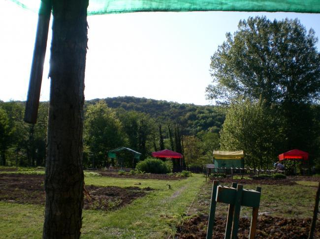 Name:  Yemyeşşil.jpg Views: 812 Size:  57.7 KB