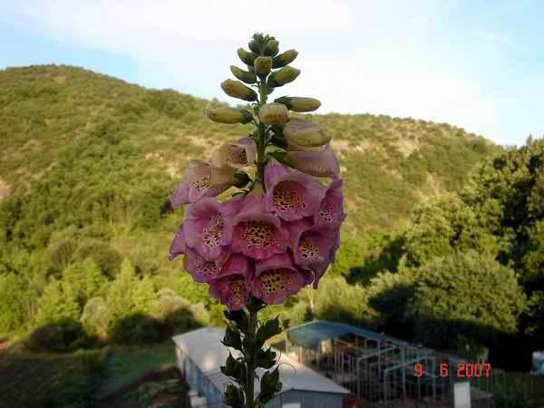 Name:  Kopyası Picture 12-06 026.jpg Views: 5467 Size:  34.2 KB