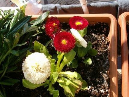 Name:  çiçeklerim 002.jpg Views: 6960 Size:  32.8 KB