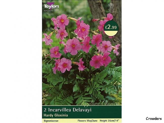 Name:  Incarvillea_delavayi_2_by_taylors_bulbs - Kopya.jpg