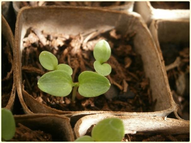 Name:  Hezaren, Delfinyum Çiçeği (Delphinium) (2).jpg Views: 824 Size:  39.1 KB