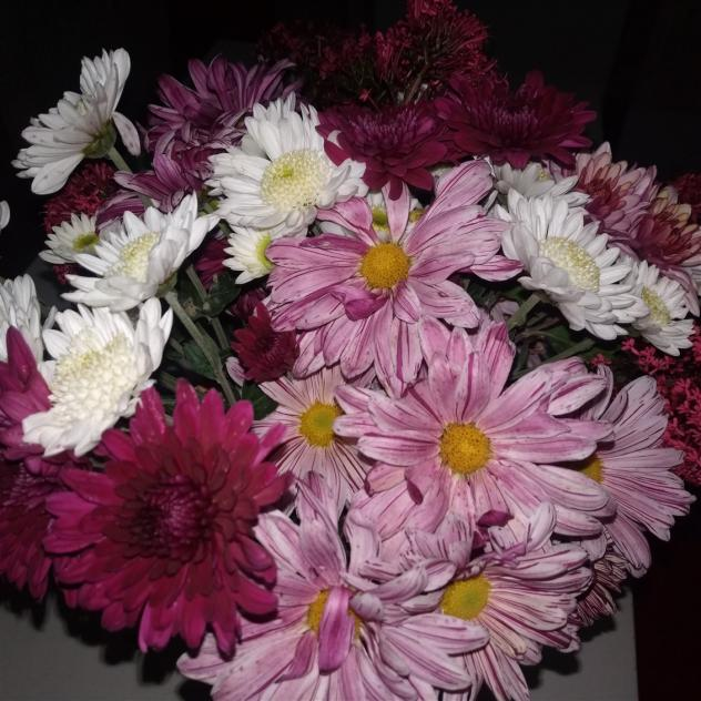 Name:  Kasımpatı (Chrysanthemum) 6.jpg Views: 251 Size:  70.6 KB