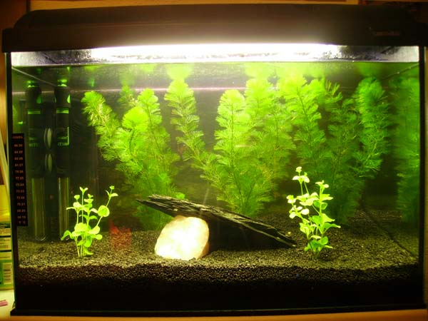 Name:  Aquarium.JPG