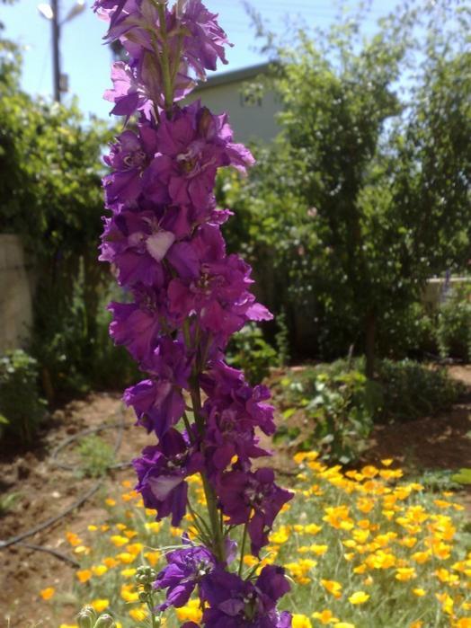 Name:  bahçe5.jpg Views: 14988 Size:  64.4 KB