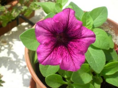 Name:  çiçek3.jpg Views: 11068 Size:  19.8 KB