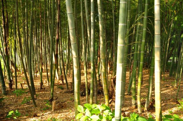Name:  Bambu_03.jpg