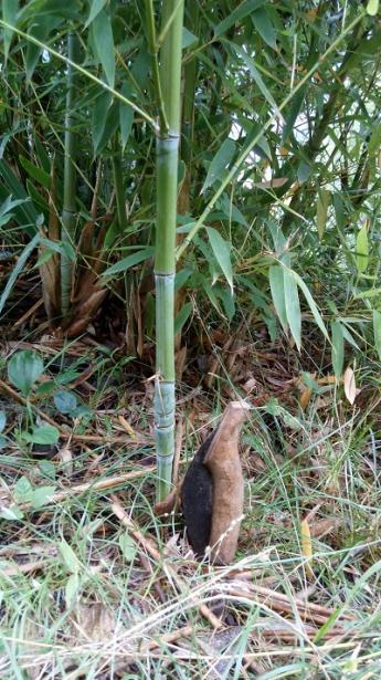 Name:  bambu.jpg Views: 78 Size:  66.8 KB