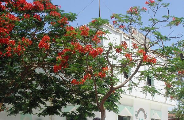 Mekke Ve Medinede Ağaçlar Agaclarnet