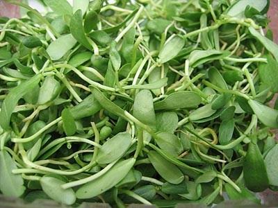 Name:  fenugreeksprouts.jpg