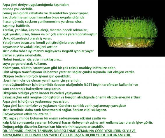 Name:  arpa çimi 2.jpg