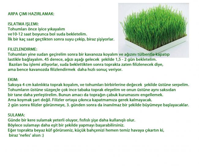 Name:  arpa çimi 3.jpg
