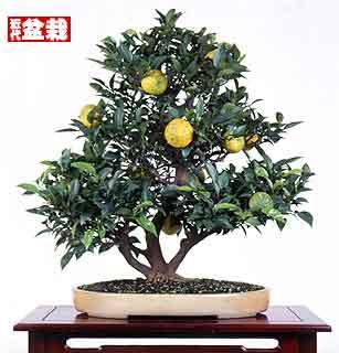 Name:  limon.jpg Views: 39401 Size:  14.4 KB