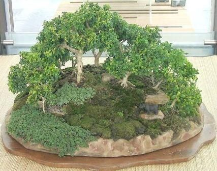 Name:  Forest Group Grup Bonsai Stili..jpg