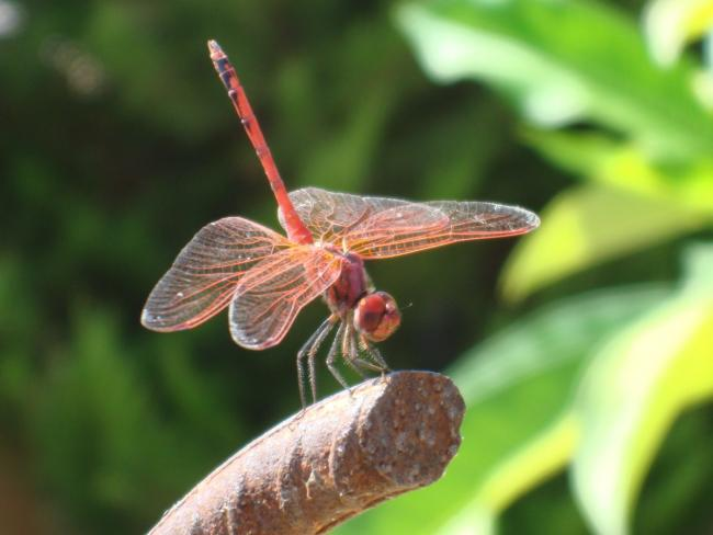 Name:  dragonfly.jpg