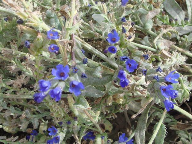 Name:  bahçe 071.jpg Views: 2527 Size:  71.5 KB