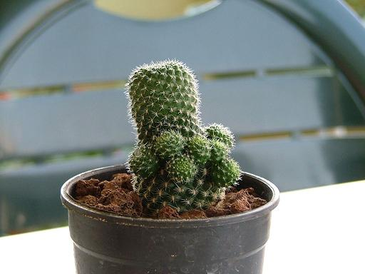 Name:  cacti1.JPG Views: 4144 Size:  31.6 KB