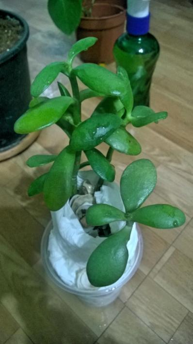 Name:  bilinmeyen bitki.jpg Views: 899 Size:  33.8 KB