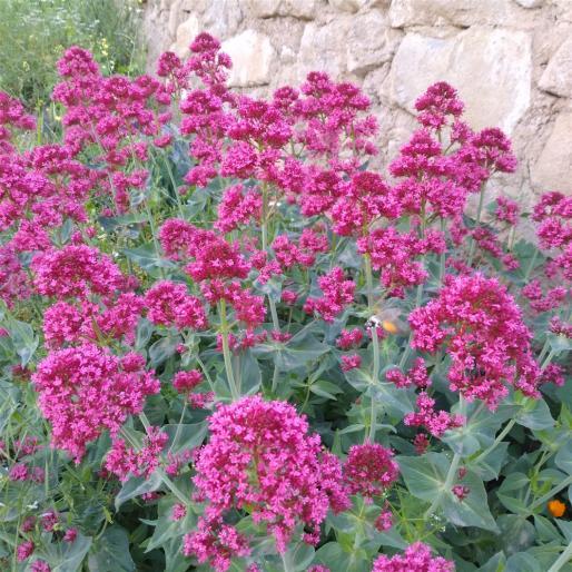 Name:  çiçek .jpg Views: 433 Size:  74.8 KB