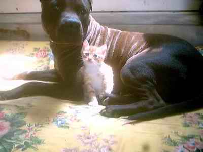 Name:  Pit bull vahşeti ve cimcim.jpg