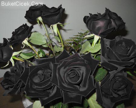 الوردة السوداء النادرة attachment.php?attachmentid=15002&stc=1&d=1183535552