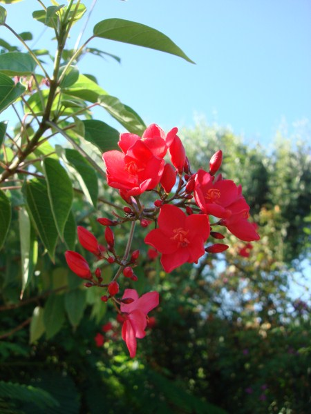 Name:  red flowers.jpg