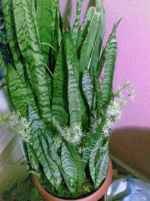 Kokulu Süs Bitkileri Sarılıcılar Ve çalılar Page 3 Agaclarnet