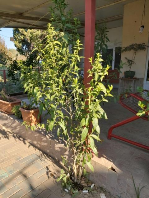 Name:  bu bitkinin adı nedir.jpg Views: 231 Size:  59.9 KB