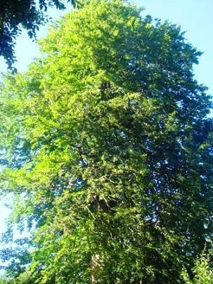 Name:  Ags 15 2008 Keltepe 144.jpg Views: 940 Size:  49.2 KB