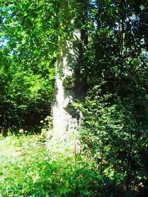 Name:  Ags 15 2008 Keltepe 130.jpg Views: 717 Size:  49.8 KB