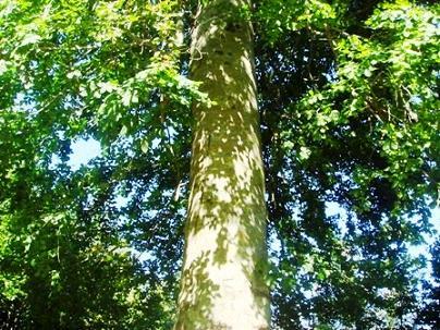 Name:  Ags 15 2008 Keltepe 104.jpg Views: 692 Size:  55.0 KB