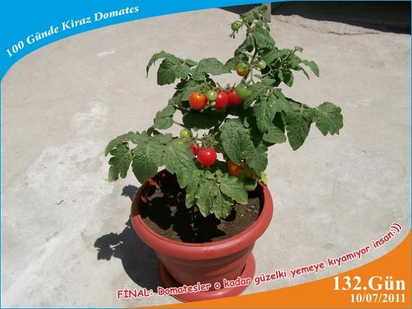 Name:  domates25.jpg Views: 6813 Size:  46.7 KB