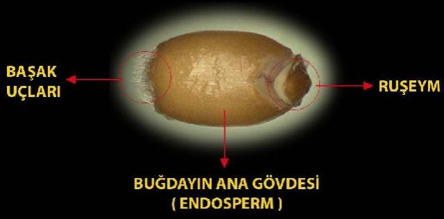 Name:  ruşem 4.jpg