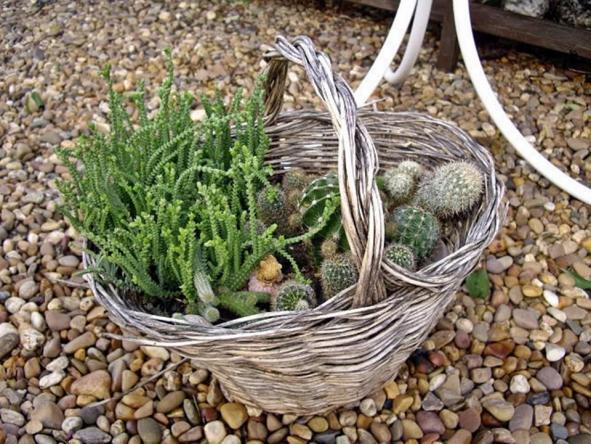 Balkonda daha ok bitki i in z mler page 17 - Reciclar cestas de mimbre ...