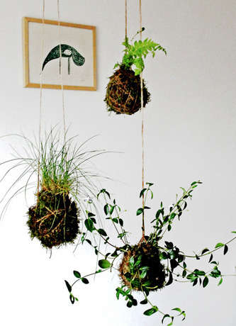 Name:  kokedama-final.jpg