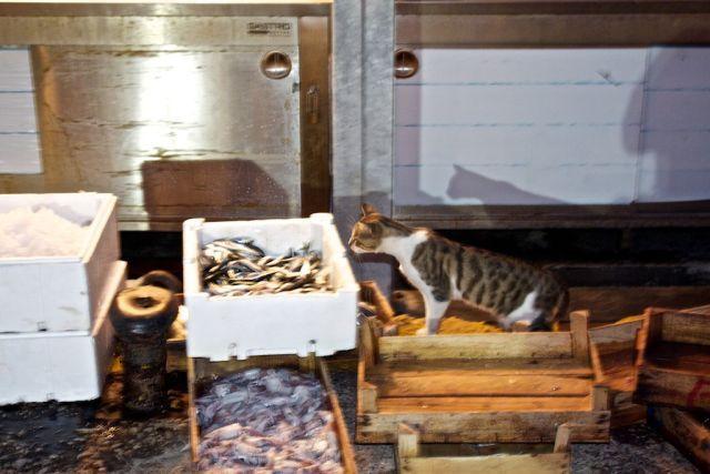 Name:  Kedi - Balık.jpg Views: 486 Size:  47.8 KB