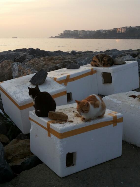 Name:  Cats of Kadıkoy.jpg Views: 340 Size:  41.0 KB