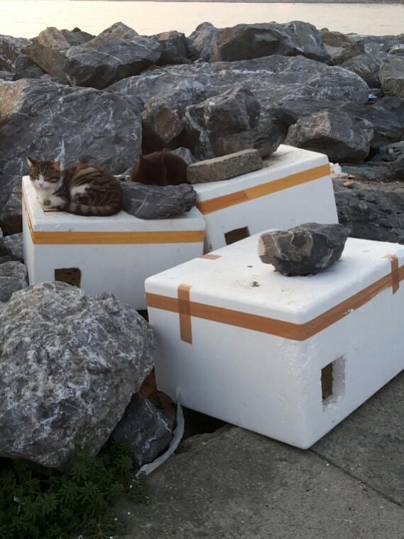 Name:  House for cats.jpg Views: 354 Size:  66.8 KB