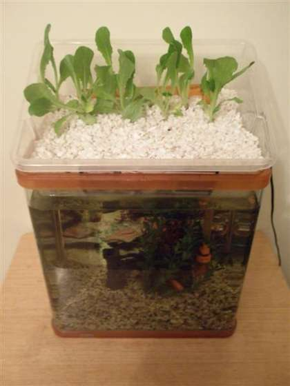 Name:  Small-Aquaponic-Unit.jpg