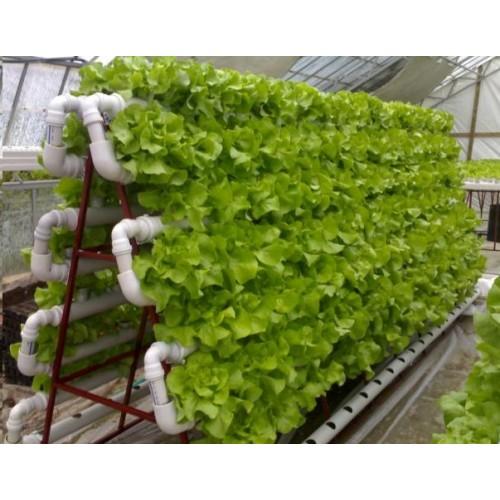 Name:  growshop- bitki lamba-hidroponik- hydroton-autopot-500x500.jpg Views: 5383 Size:  64.5 KB