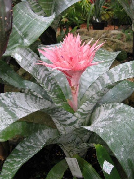 Name:  succulent and bromeliads 045.jpg